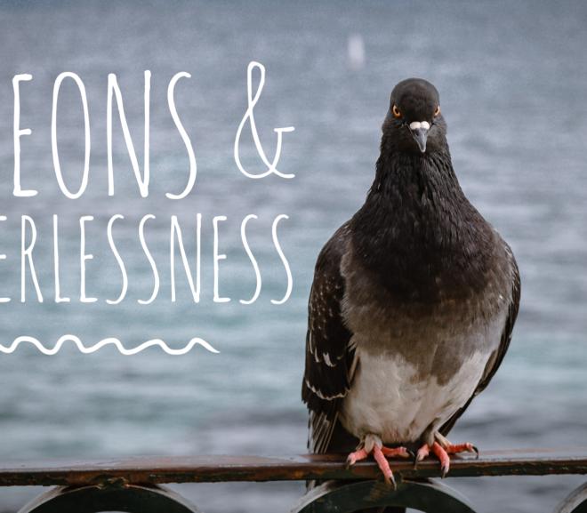Pigeons & Powerlessness